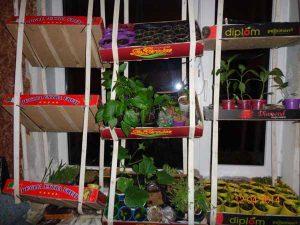 Огород на окне на себя и от себя