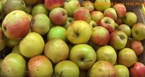 Местные яблоки