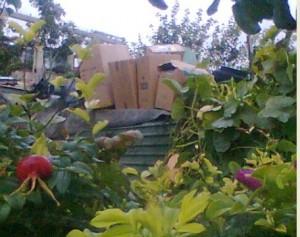 Коробки с органическими отходами