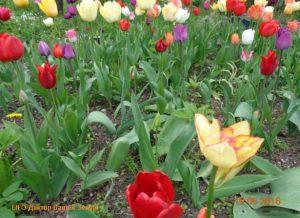 Разноцветье