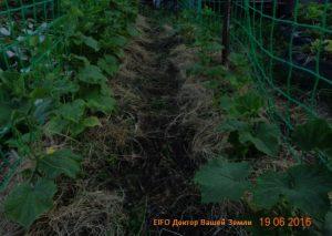 Мульчирование травой-1 2016