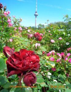 Вид из розария