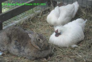 Кролик с птицами