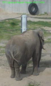 Слониха 6 т.