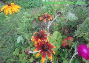 Цветы на альпийской горке 1