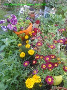 Цветы на альпийской горке 2