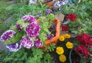 Цветы на альпийской горке 5