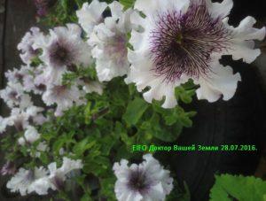 Цветы на верми септике 3
