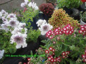 Цветы на верми септике