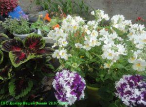 Цветы на верми септике 5