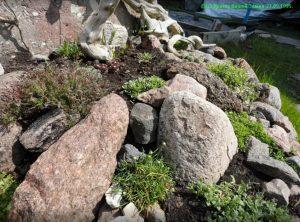 Камнеломки 1