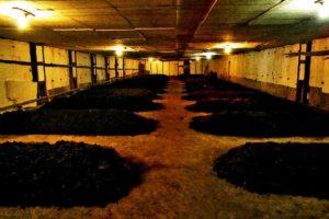 proizvodstvo-biogumusa