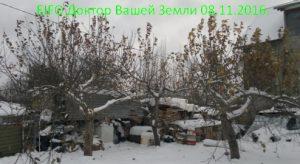 zimnyaya-obrezka-derevev-volchki