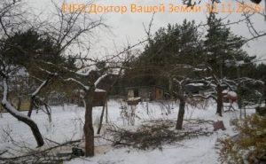 zimnyaya-obrezka-derevev-hvorost
