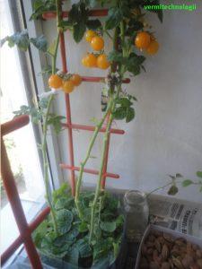 Урожайный огород