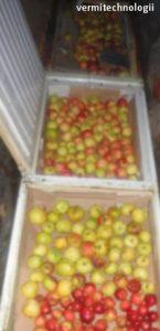 сохраняем полтонны яблок