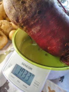 Наша картошка 1286 гр