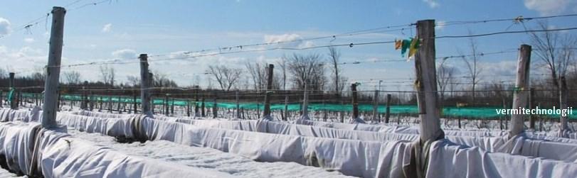 Как и чем укрывать виноград на зиму — готовим растение к защите от морозов и перепадов температур заранее и правильно